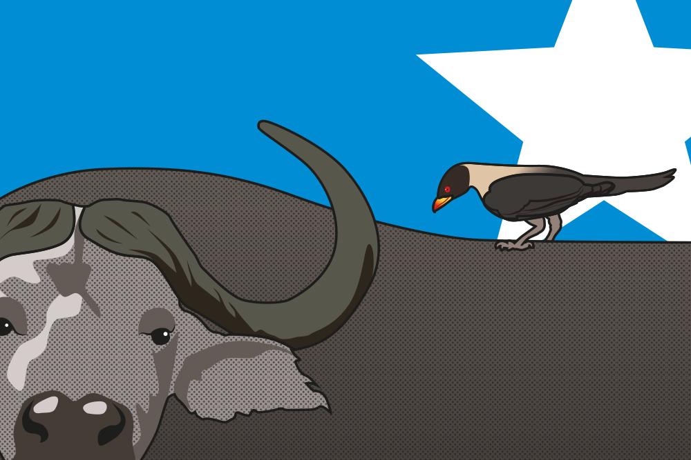 Vogel und Stier, die gemeinsam in Symbiose leben